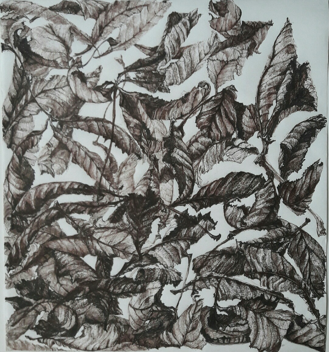 De Terre à Ciel, détail - Feutre sépia, 6 dessins de 50x50 cm