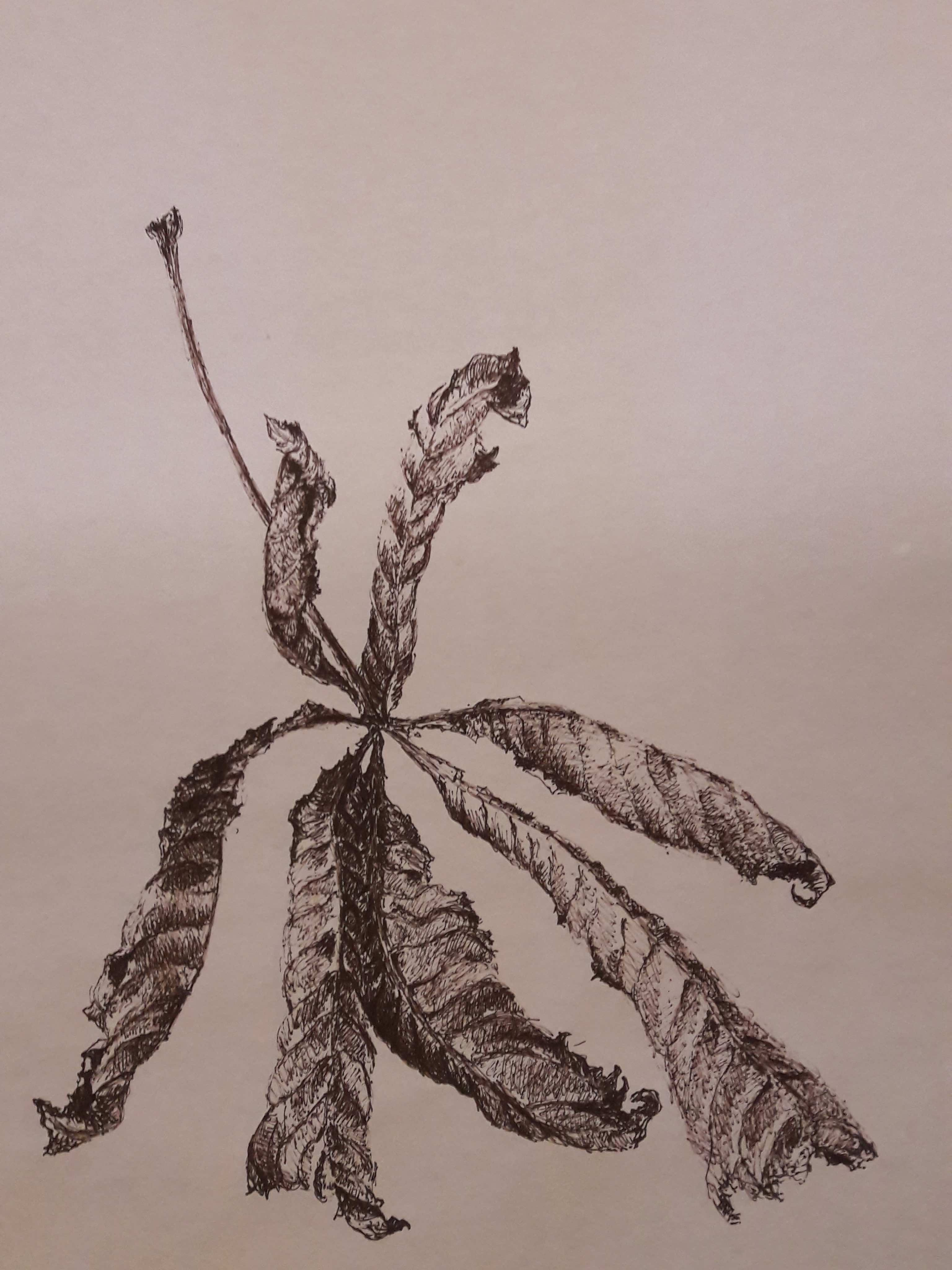 Flux et reflux (détail) - Rouleau, feutre sépia, 4m55